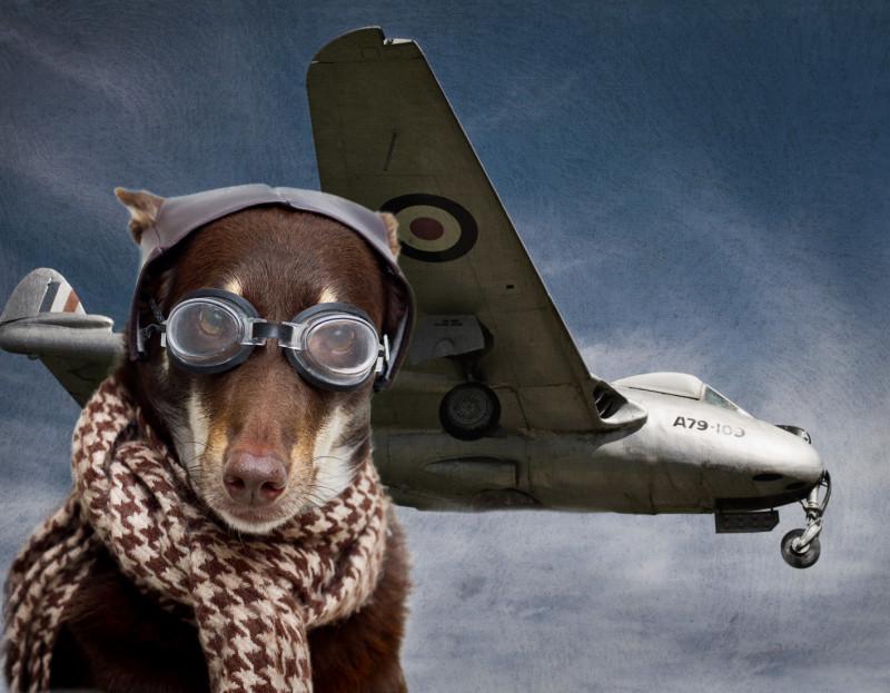 Смешная картинка летчика, открытки