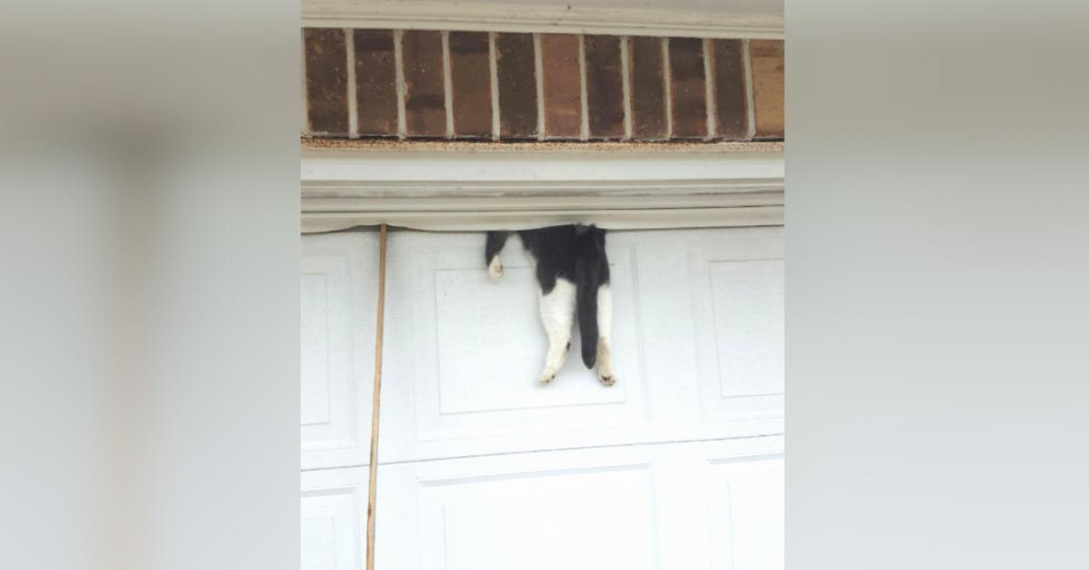 Help Cat Gets Stuck In The Garage Door