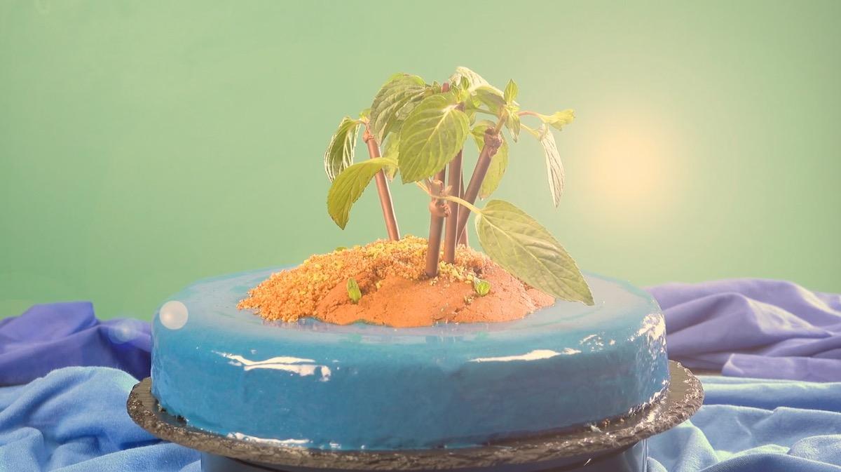 Delicious Tropical Island Cake   Homemade Summer Cake   Bake Your Own Cake