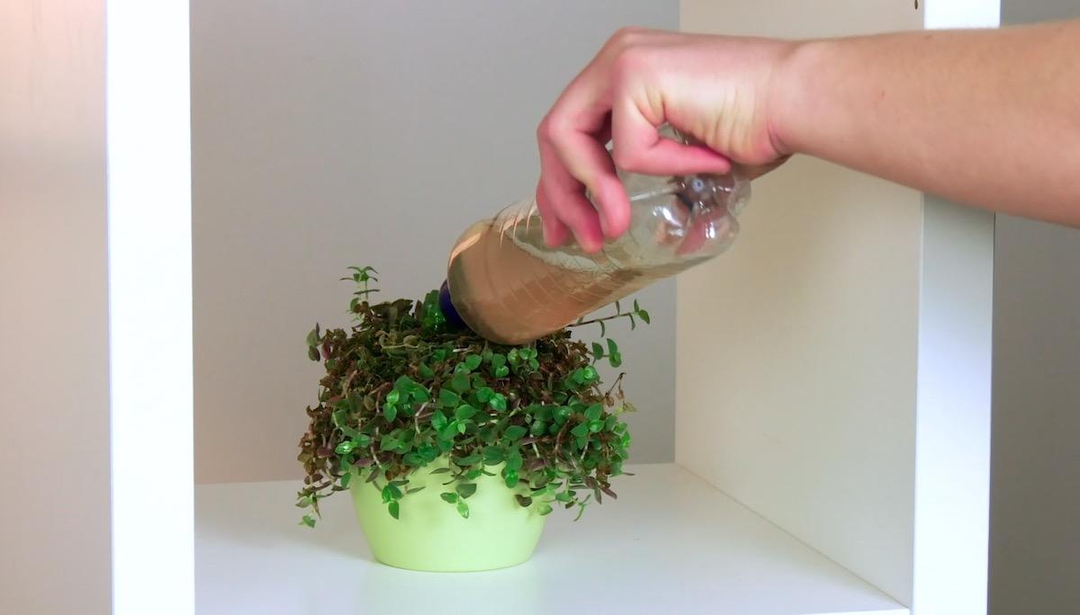 Shandy Fertilizer