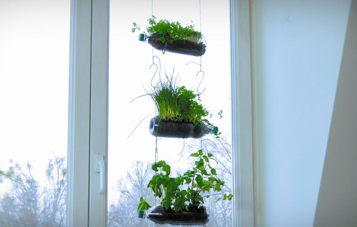 Plastic Bottle Plants