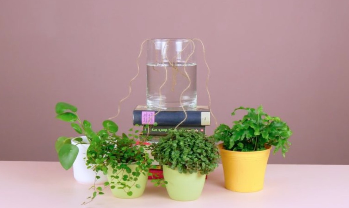 7 Hacks For Fresh Plants