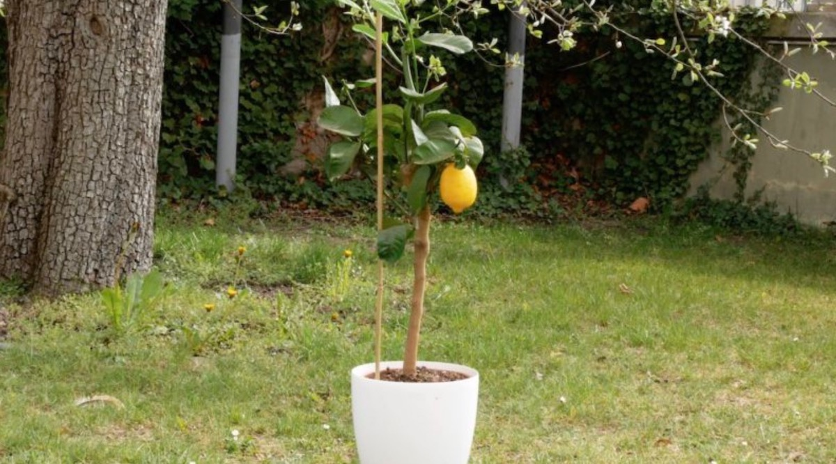 DIY Fruit & Vegetable Garden