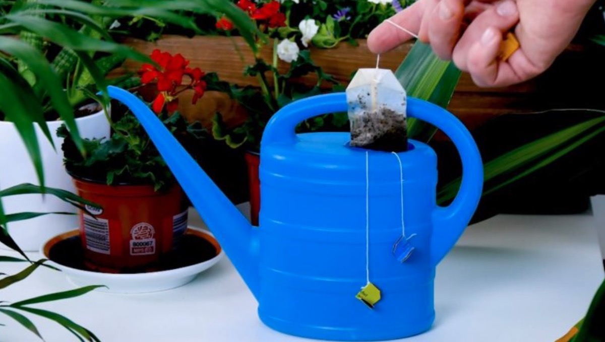 Tips & Tricks For Old Tea Bags
